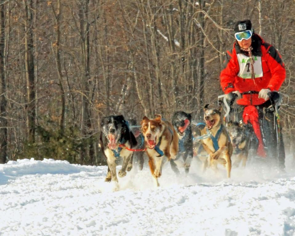 Name:  Sled Dog Day 2.jpg