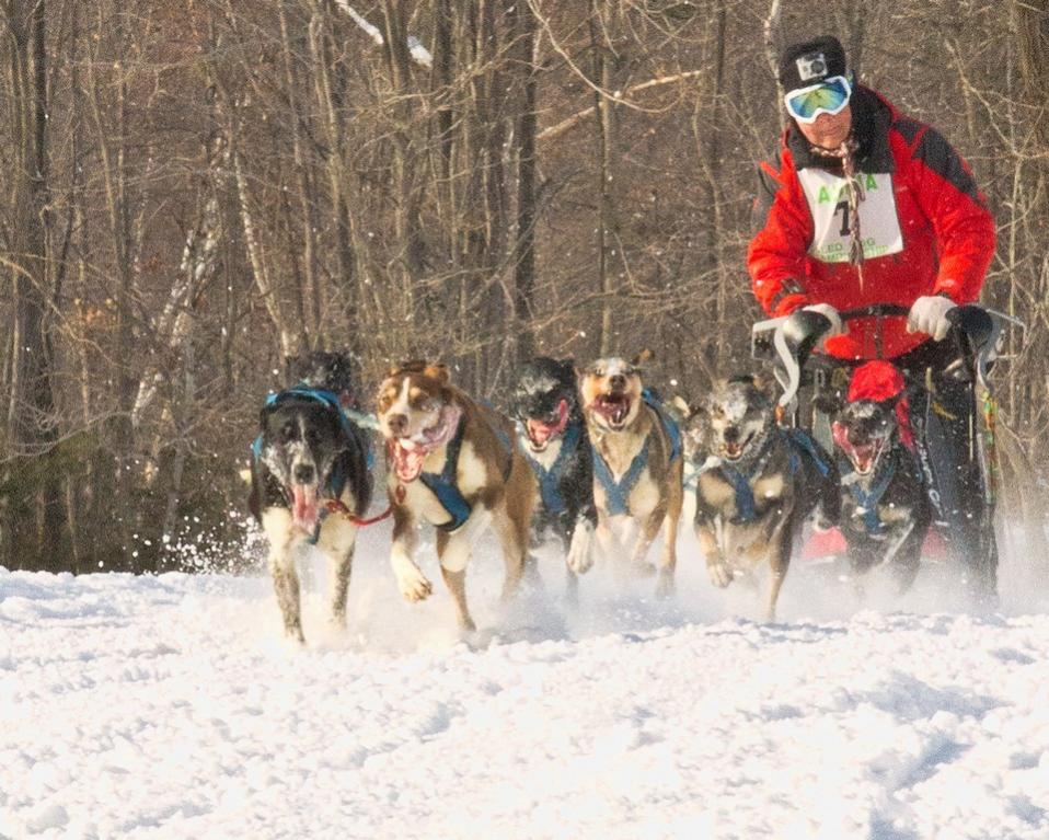 Name:  sled_dog_2014_day_far_cold-qpr.jpg
