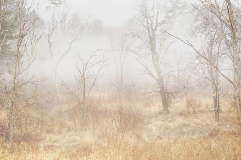 Name:  swamp_in_fog_3.jpg Views: 450 Size:  56.1 KB