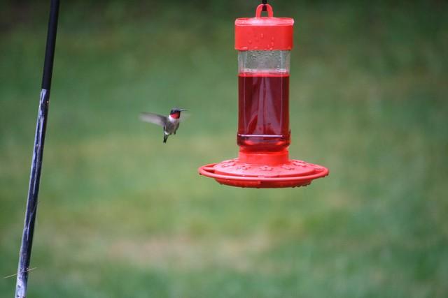 Name:  Hummingbird 2.jpg Views: 1125 Size:  50.1 KB