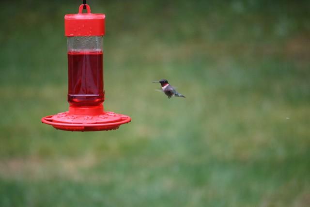 Name:  Hummingbird 3.jpg Views: 917 Size:  46.6 KB