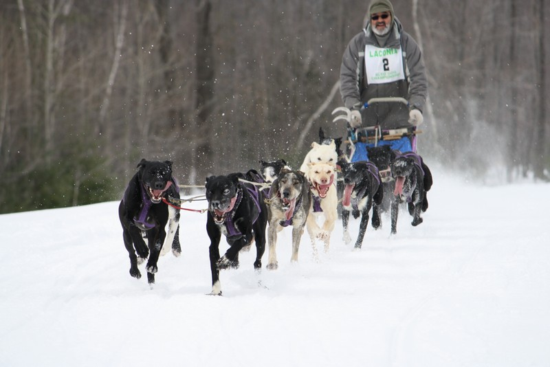 Name:  Laconia Sled Dog a smaller 02.jpg Views: 734 Size:  89.2 KB