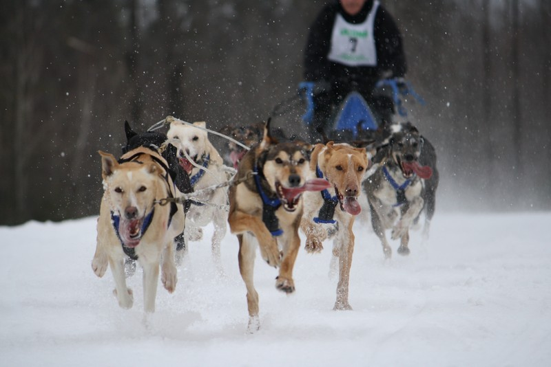 Name:  Laconia Sled Dog a smaller 09.jpg Views: 713 Size:  90.6 KB