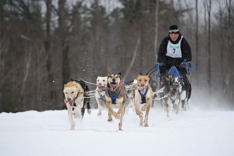 Name:  Laconia Sled Dog a smaller 08.jpg