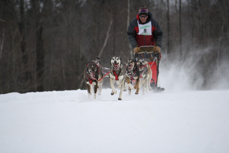 Name:  Laconia Sled Dog a smaller 13.jpg