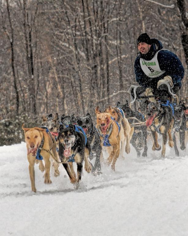 Name:  sled_dog_2014_5-FAR.jpg Views: 437 Size:  84.7 KB