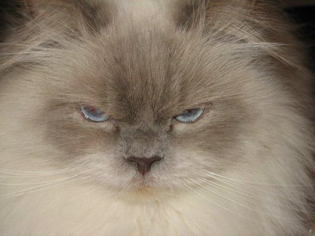 Name:  Cats Feb 07 019.jpg Views: 981 Size:  51.0 KB