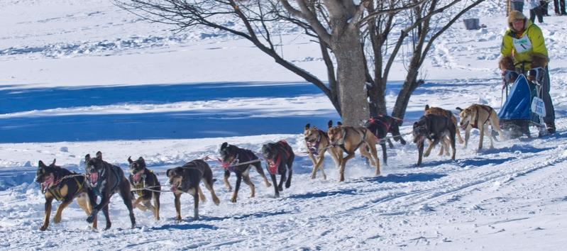 Name:  sled_dog_2014_day_2_12_view.jpg Views: 435 Size:  65.6 KB