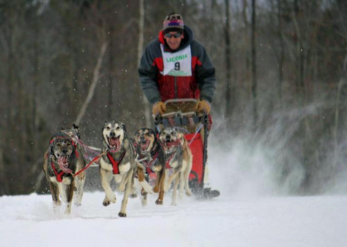 Name:  Laconia Sled Dog 2-13-2011 smaller 43.jpg Views: 789 Size:  37.4 KB