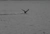 203Loon_takeoff_2_082805.jpg