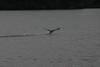 203Loon_takeoff_3_082805.jpg