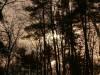 431The_Woods_1.JPG