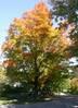 176A2_October_281_-_2.jpg