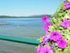 83Late_Summer_Flowers.JPG